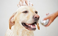 6 Easy DIY, Natural Homemade Dog Shampoo Recipes For Your Furballs