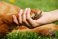 Spirituality Of Dogs - A Personal Experience