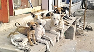 Pet lodging and boarding in Pune(Shivajinagar)