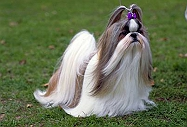 Want To Make Your Dog A Fashionista?? Here Are 4 Hairstyles You Can Try