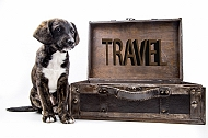 travel with my dog